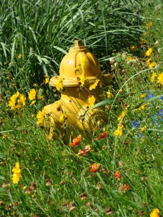 Denver Pics Hydrant