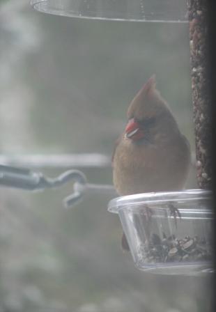Stocking cardinal mrs