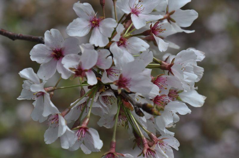 Goodbye poplar lawn blossom