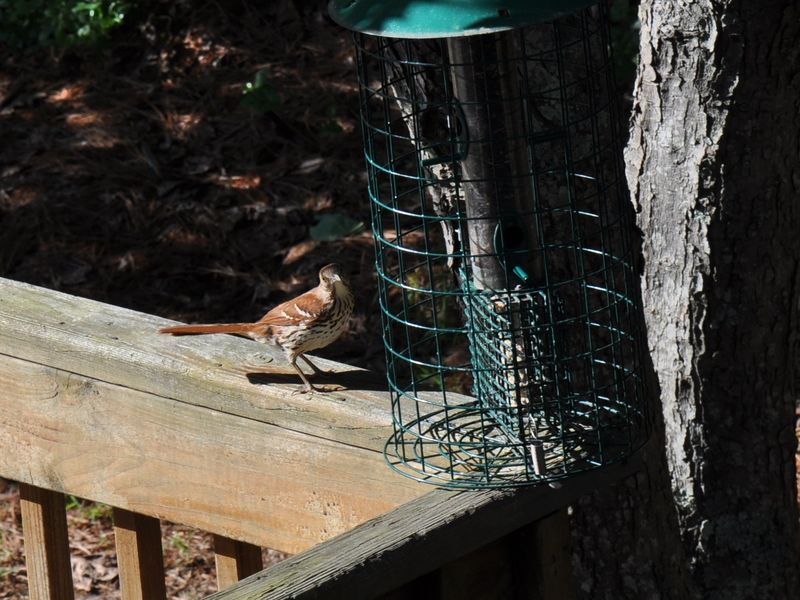 Guest room brown thrasher 2