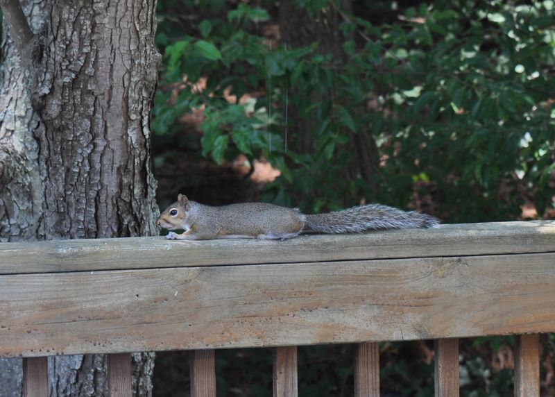 Squirrel vendetta