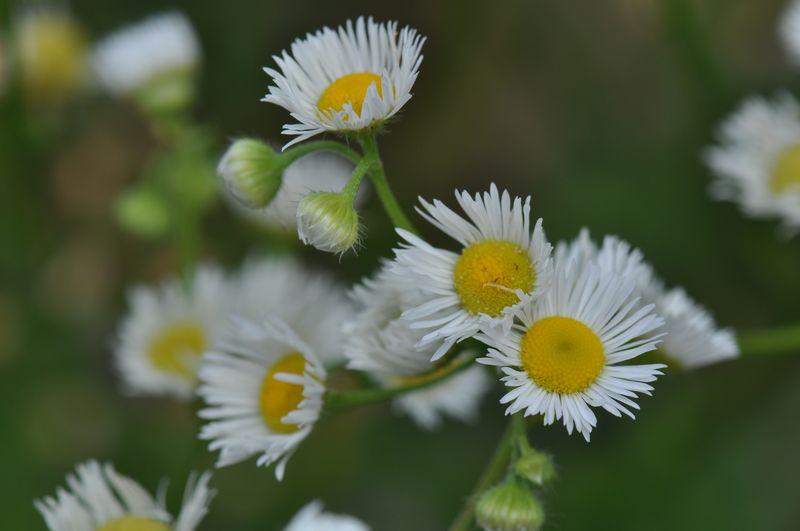 Weekend daisies