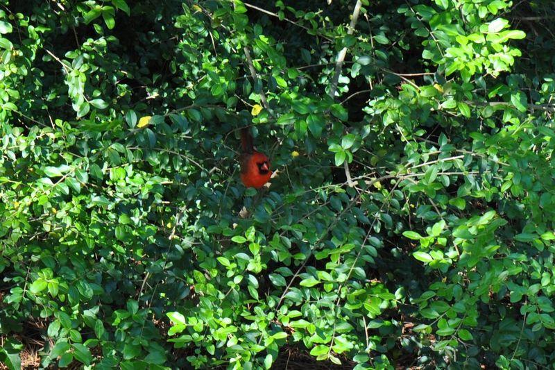 Guest room cardinal